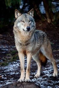 Grey Wolf Trading Post